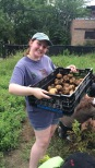 Leora collecting the potatoes we picked at Growing Home, Chicago's only USDA certified organic urban farm